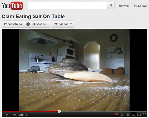 Youtube clam eats salt