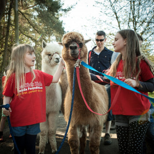 An image of two young girls in red Sick Kids Friends Foundation t-shirts walking with two alpacas