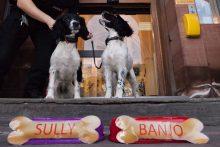 Puppy Police Dogs at Edinburgh Children's Hospital