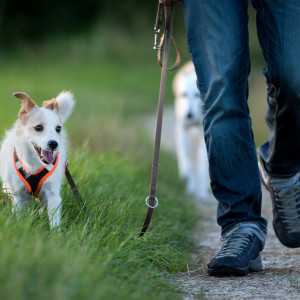 Dogs pawsitively impact national walking figures