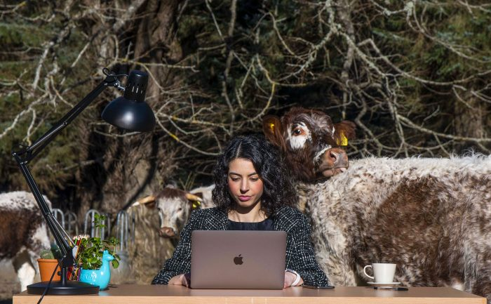 Tech PR Photography of remote office in a rural cow field