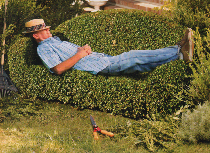 bed hedge