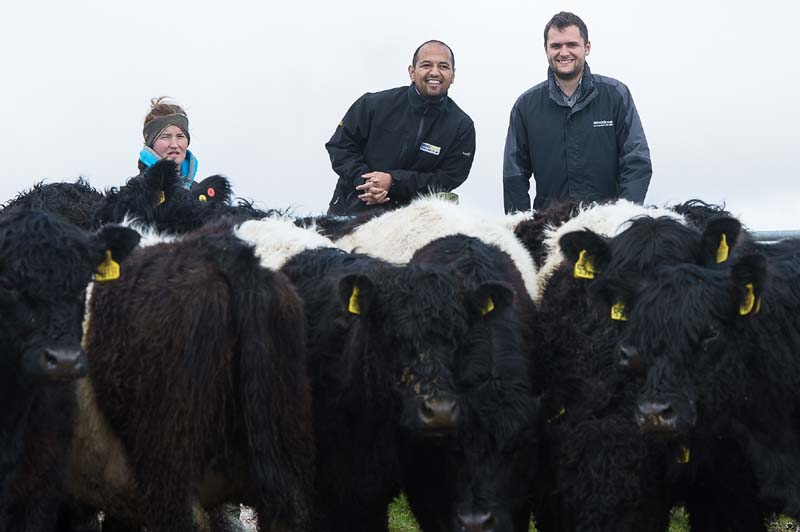 BANDED_GALLOWAYS_HPR-4