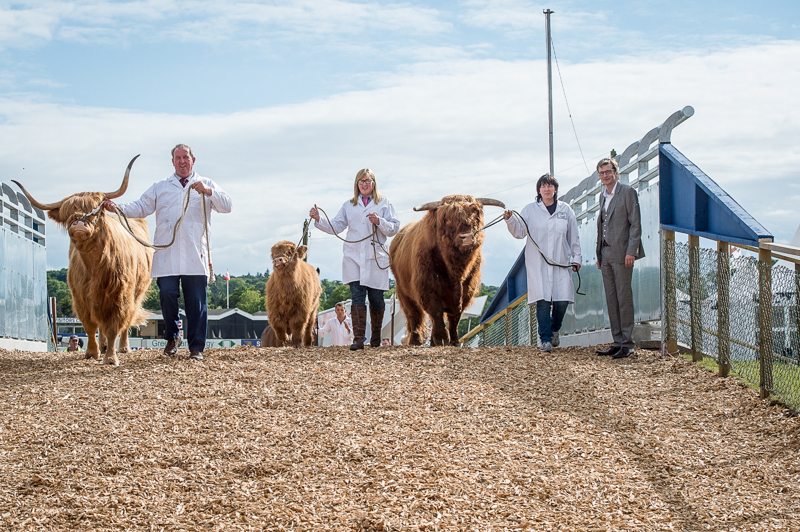 Livestock bridge, Ingliston, Edinburgh, 21st, June, 2016