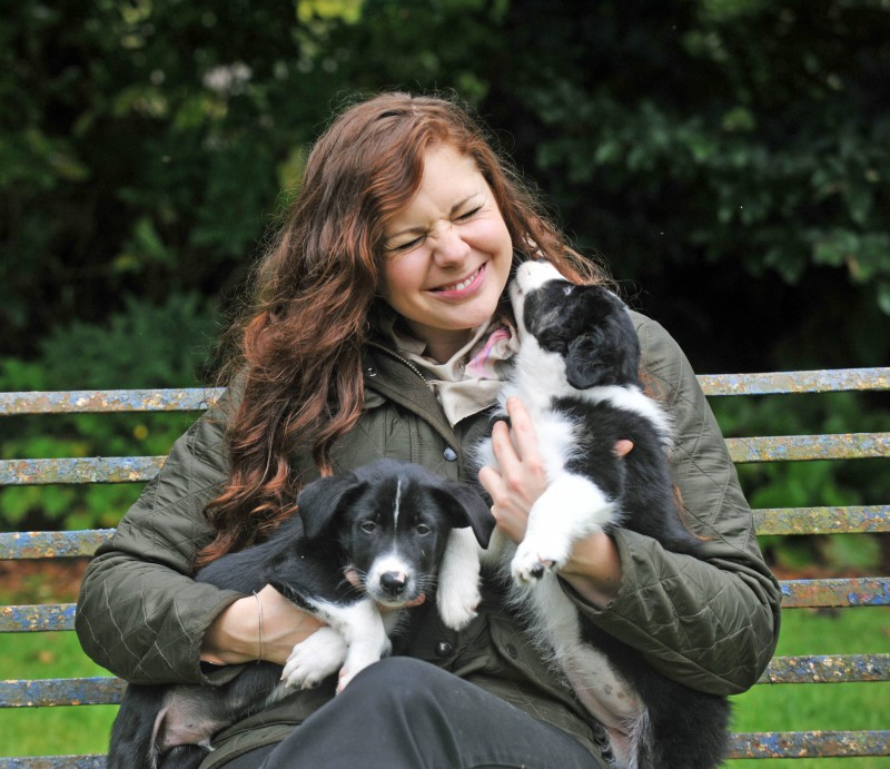 Sheepdog puppies with wind farm worker