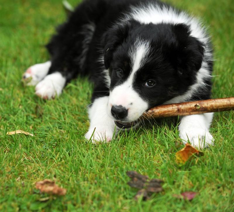 Sheepdog trials PR photocall
